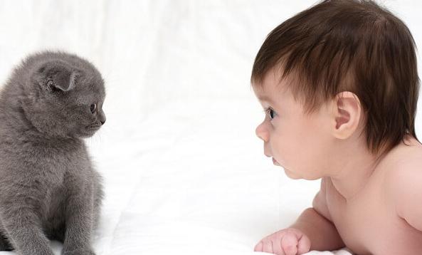 Benarkah Hewan Peliharaan Dapat Membuat Anak Lebih Sehat