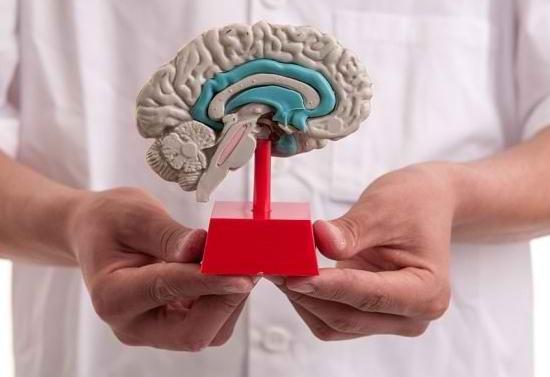 Mengenali Fungsi Otak Tengah Beserta Strukturnya