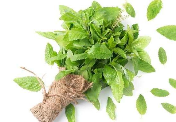 Mengetahui Berbagai Manfaat Basil bagi Kesehatan